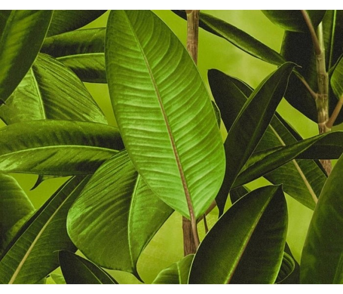 DW351362011 Botanical Wallpaper
