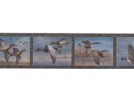 Prepasted Wallpaper Borders - Birds Wall Paper Border HB726B