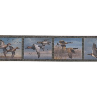 5 1/2 in x 15 ft Prepasted Wallpaper Borders - Birds Wall Paper Border HB726B