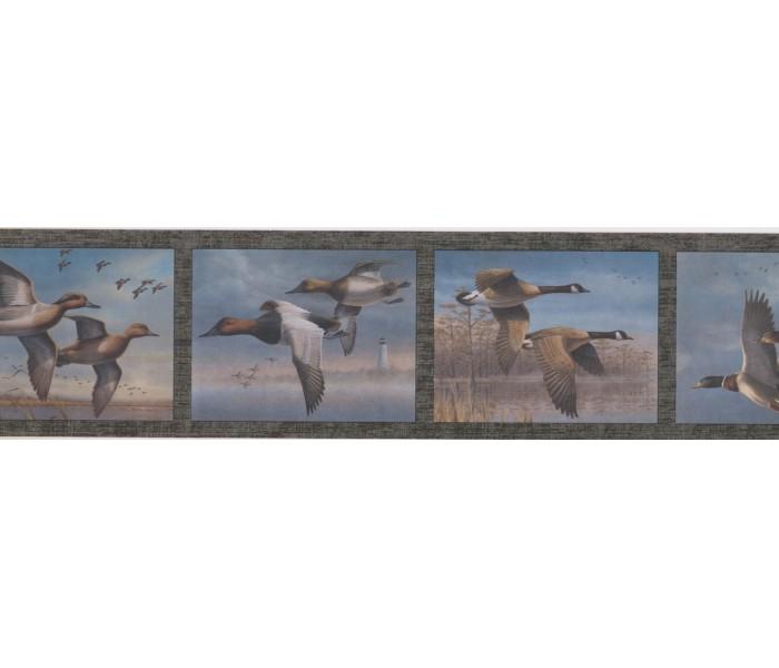New  Arrivals Wall Borders: Birds Wallpaper Border HB726B