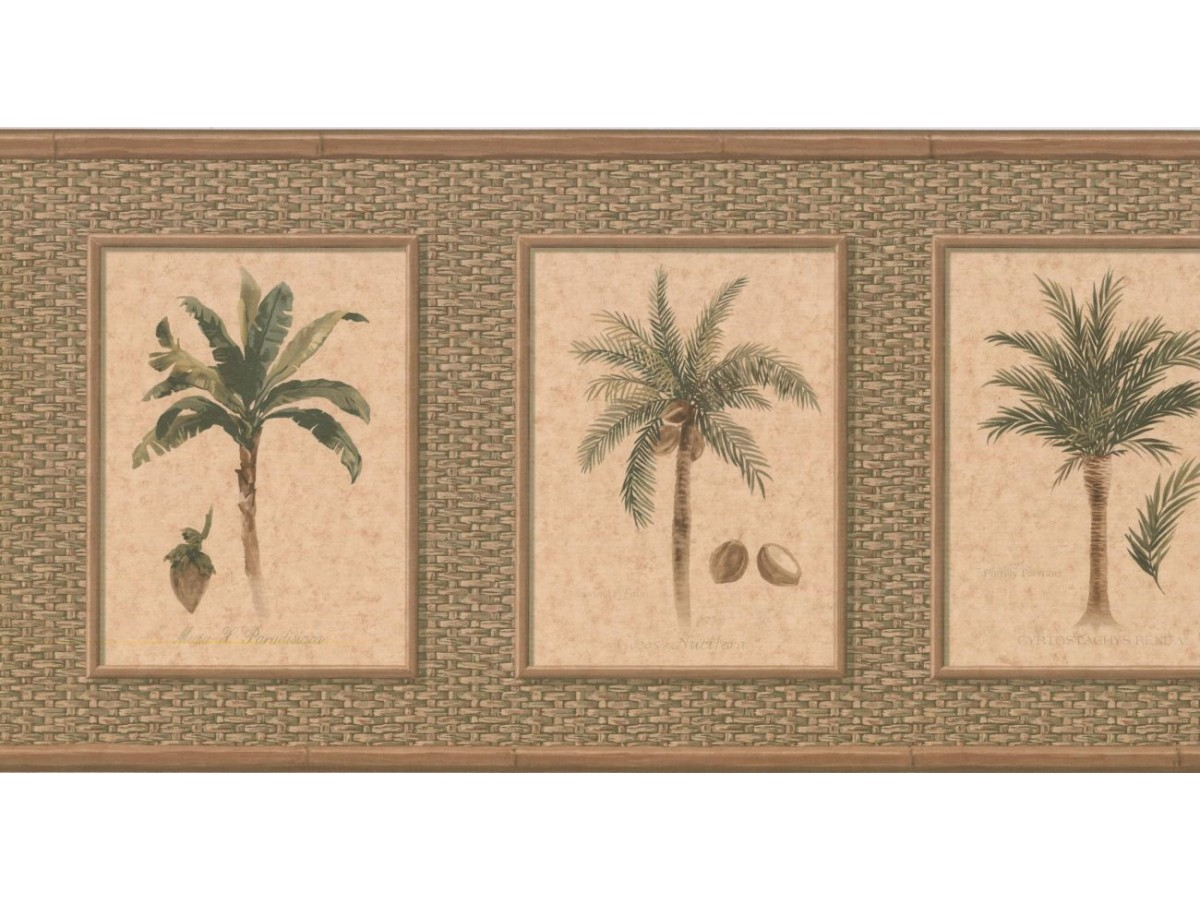Palm Tree Wallpaper Border Tk6246b
