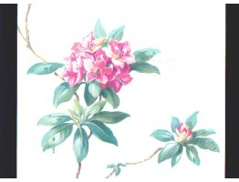 Floral Wallpaper 4163h