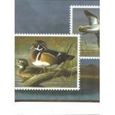 Birds  Wallpaper Borders: Birds Wallpaper Border 528 HG