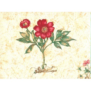 Floral Wallpaper 6022d