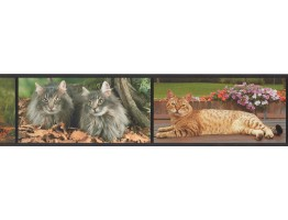 6 in x 15 ft Prepasted Wallpaper Borders - Cats Wall Paper Border AA1014A