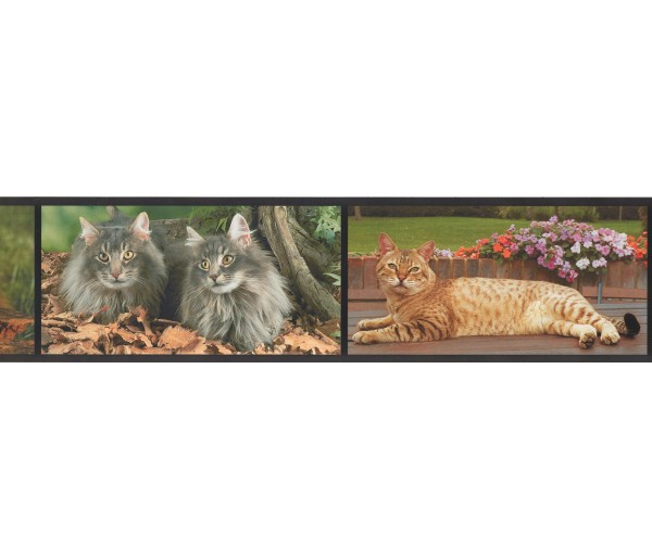 Cats Wallpaper Borders: Cats Wallpaper Border AA1014A