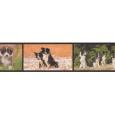 Dogs Wallpaper Borders: Dogs Wallpaper Border AA1021A