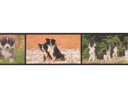 6 in x 15 ft Prepasted Wallpaper Borders - Dogs Wall Paper Border AA1021A