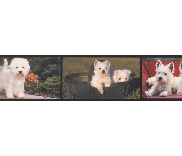 Dogs Dogs Wallpaper Border AA1026A York Wallcoverings