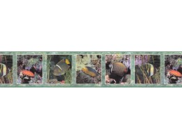 6 in x 15 ft Prepasted Wallpaper Borders - Fishes Wall Paper Border B92500