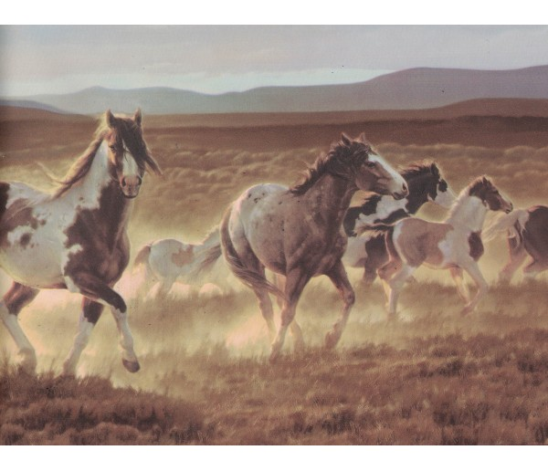 Horses Wallpaper Borders: Horses Wallpaper Border B96510