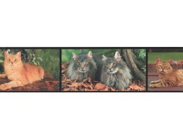 6 in x 15 ft Prepasted Wallpaper Borders - Cats Wall Paper Border 4070 BB A