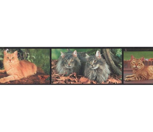 Cats Wallpaper Borders: Cats Wallpaper Border 4070 BB A