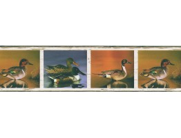 Prepasted Wallpaper Borders - Birds Wall Paper Border FDB03844M