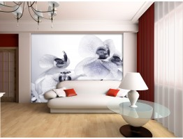 Wall Mural - Wallpaper Mural for Accent Wall Non-woven FTN 2464