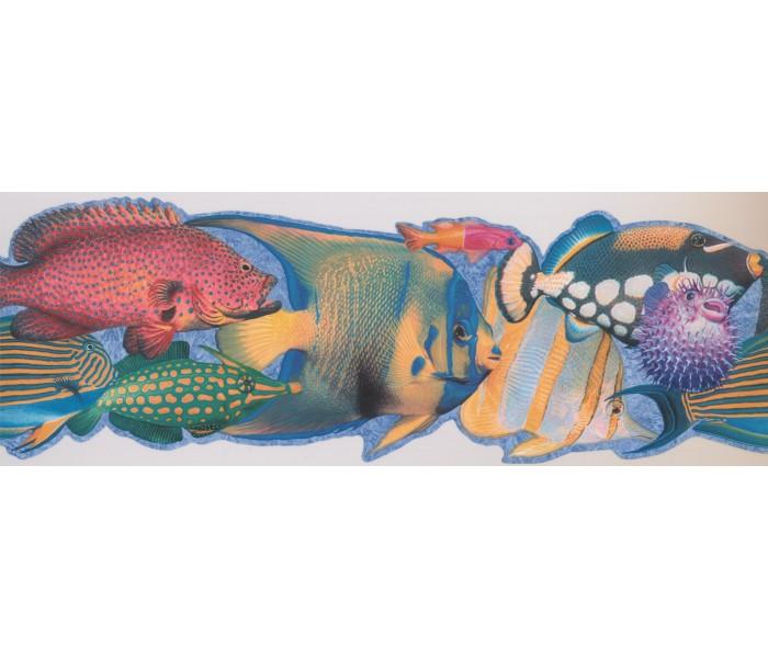 Sea World Wall Borders: Fish Wallpaper Border 4041 ISB