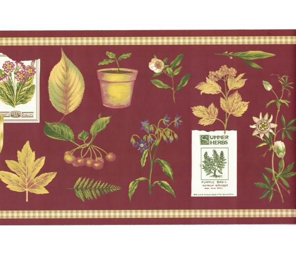 Garden Wallpaper Borders: Summer Herbs Wallpaper Border SPB5713