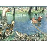 Birds  Wallpaper Borders: Ducks Wallpaper Border b2002nf