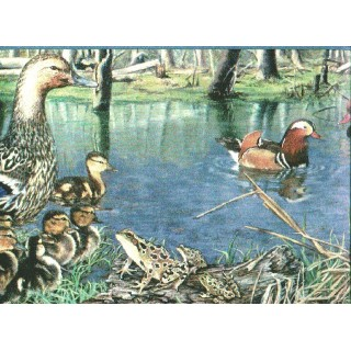 10 1/4 in x 15 ft Prepasted Wallpaper Borders - Ducks Wall Paper Border b2002nf