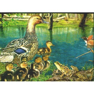 10 1/4 in x 15 ft Prepasted Wallpaper Borders - Ducks Wall Paper Border b2003nf