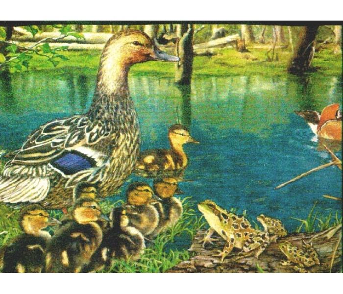 Birds  Wallpaper Borders: Ducks Wallpaper Border b2003nf