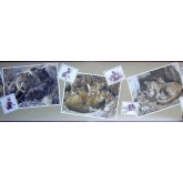 Clearance: Animals Wallpaper Border b2072HW