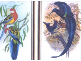 10 1/4 in x 15 ft Prepasted Wallpaper Borders - Birds Wall Paper Border SG24757B