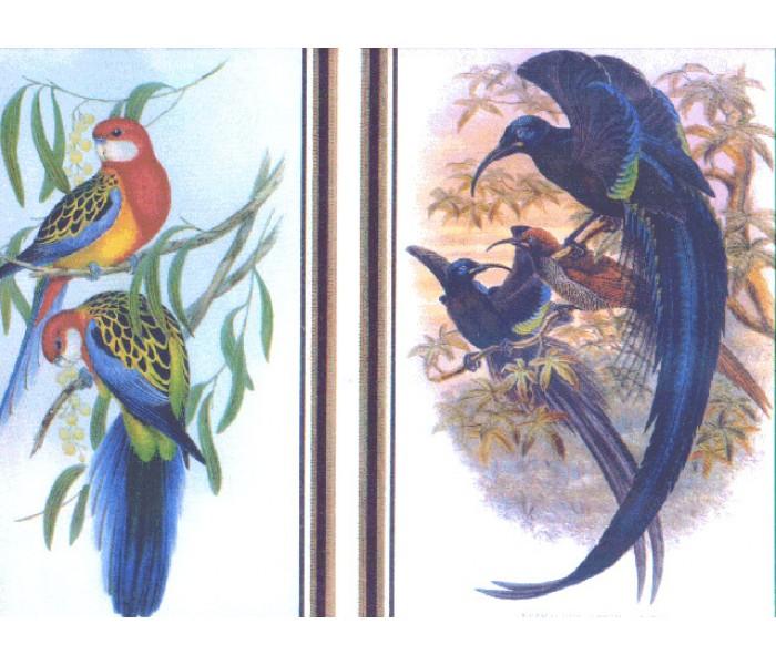 Birds  Wallpaper Borders: Birds Wallpaper Border SG24757B