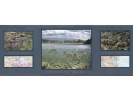 Prepasted Wallpaper Borders - Fish Wall Paper Border B4271h