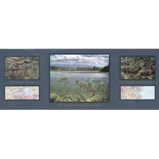 10 1/4 in x 15 ft Prepasted Wallpaper Borders - Fish Wall Paper Border B4271h