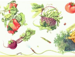 Prepasted Wallpaper Borders - Vegetables Wall Paper Border b4281mb