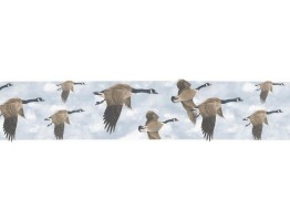 Prepasted Wallpaper Borders - Birds Wall Paper Border B76374