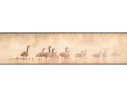 Prepasted Wallpaper Borders - Birds Wall Paper Border LD3311
