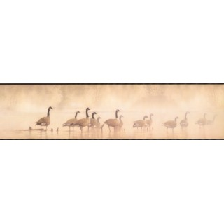 6 in x 15 ft Prepasted Wallpaper Borders - Birds Wall Paper Border LD3311